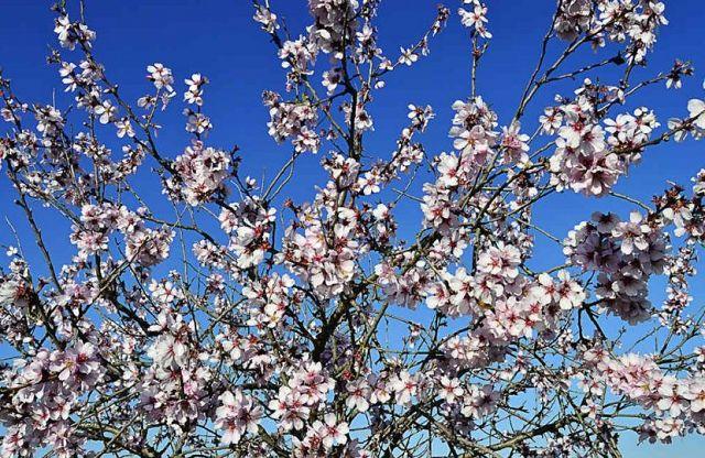 De bomen staan alweer in bloei - DroomHuisSpanje